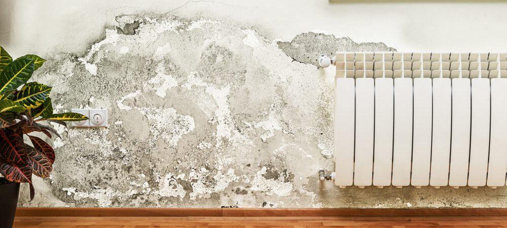 Jak zapobiec powstaniu pleśni w mieszkaniu?